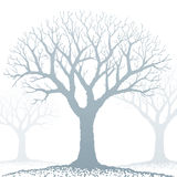 Bare tree (vector) Stock Images