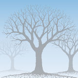 Bare tree (vector) Stock Photography