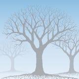 Bare tree (vector) Stock Photography