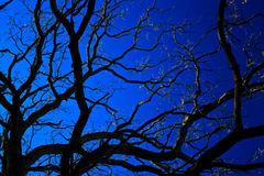 Bare tree in waning light Royalty Free Stock Photography