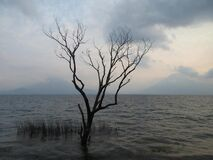Bare tree in water