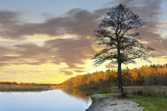 Bare tree by water in autumn Stock Photos