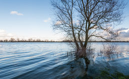 Bare tree in the water Stock Image