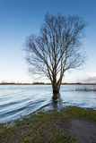 Bare tree in the water Royalty Free Stock Photos