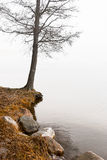 Bare tree by water Royalty Free Stock Photography