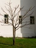 Bare tree and white building. Bare branched young sapling tree with white building in background Royalty Free Stock Photography