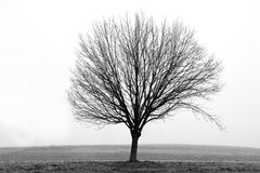 Bare Tree in Winter Fog Royalty Free Stock Images