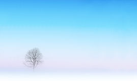 Bare tree in winter landscape Stock Image