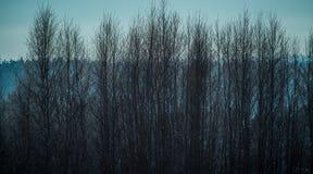 Bare tree at winter night royalty free stock image