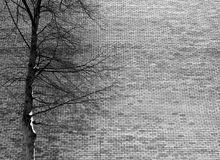 Bare tree in front on brick wall stock image