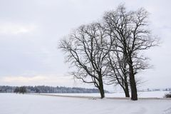 Bare trees Stock Photos