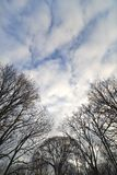Bare trees. Stock Photography