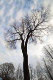 Bare trees. Stock Photos