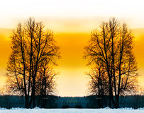 The bare trees. The bare trees in winter park Stock Photo
