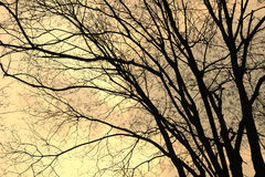 Bare trees Royalty Free Stock Image