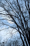 Bare trees Royalty Free Stock Photos