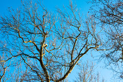 Bare Trees in Afternoon Sun Royalty Free Stock Images