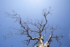 Bare trees Stock Photos