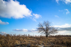 Bare trees. Against the blue sky Stock Images