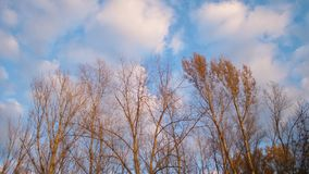 Bare trees against blue sky with clouds.  stock video footage