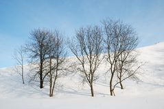 Bare trees against snow slope and blue sky. Royalty Free Stock Image