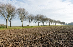Bare trees along a plowed field Royalty Free Stock Images