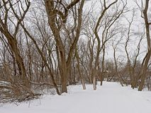 Bare trees along a snow covered hiking trail in Ottawa, Canada. Bare trees along a snow covered hiking trail on a grey cold winter day in Ottawa, Canada stock photography