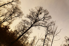 Bare trees Stock Image