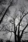 Bare trees Royalty Free Stock Photography