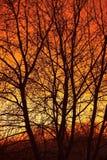 Bare trees Royalty Free Stock Photos