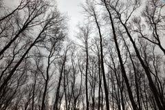 Bare trees Stock Photo