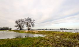 Bare trees on the bank of a Dutch river. Bare trees in the flooded floodplains of the wide Dutch river in the winter season. The water level is high because of Stock Photos