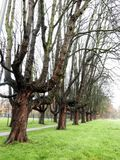 Bare trees. In a park in Antwerp, Belgium Royalty Free Stock Image