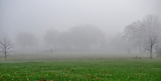 Bare trees and bicyclist in November foggy morning. Stock Photo