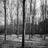 Bare trees in black and white Stock Photography