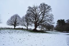 Bare trees in a snow covered field in Yorkshire, England. Bare trees in a bleak snow covered field in Yorkshire, England royalty free stock photo