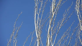 Bare trees with blue sky Stock Photo