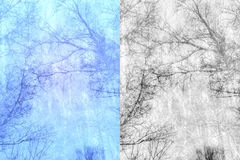 Bare trees branches Stock Photos