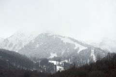 Bare trees in Caucasus mountains Stock Images