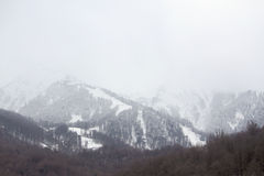 Bare trees in Caucasus mountains Royalty Free Stock Image