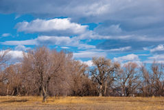 Bare Trees and Clouds at the End of Winter Stock Photo