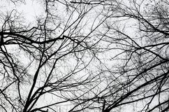 Bare trees in the cloudy sky Stock Images