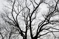 Bare trees in the cloudy sky Stock Photo