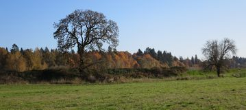 Bare trees and colors of fall as background Royalty Free Stock Photo