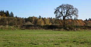 Bare trees and colors of fall as background Royalty Free Stock Photos