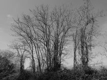 Bare trees Stock Photo