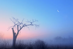 Bare Trees and Crescent Moon Stock Images