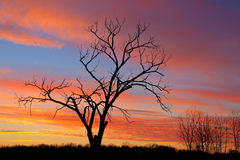 Bare Trees at Dawn. Bare trees in a winter landscape silhouetted against a colorful dawn sky, Fort Custer State Park, Michigan, USA Stock Photos