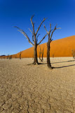 Bare trees in a desert landscape Royalty Free Stock Images