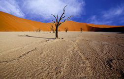 Bare trees in a desert landscape Royalty Free Stock Photo